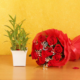 Combo  Gift of 12 Red Roses  with Bamboo Plant